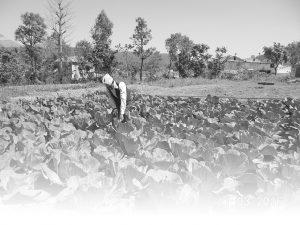 A farmer is working in the field
