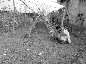 A woman is working in a farm