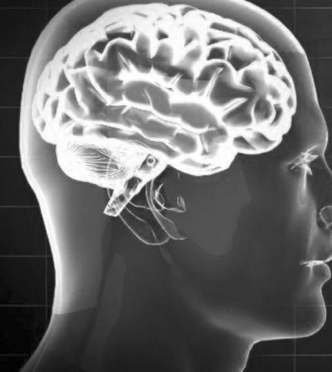 यसमा मानव मस्तिष्कको चित्र देखाइएको छ